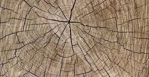 是什么原因导致老榆木家具开裂?